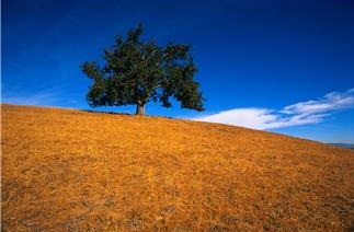 Life Coaching Tree